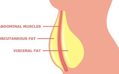 Visceral Fat: The Impact on your health and how to reduce the risks